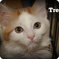 Adopt A Pet :: Trent - Springfield, PA