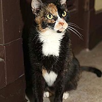 Adopt A Pet :: Clarice - Pittsburgh, PA