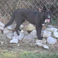 Adopt A Pet :: 36104929 - Cleveland, AL