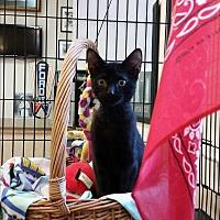 Adopt A Pet :: KITTEN Barnaby - Alpharetta, GA
