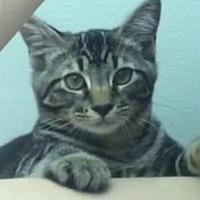 Adopt A Pet :: Peter - San Jose, CA