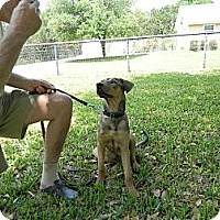 Adopt A Pet :: Mattis - Bulverde, TX