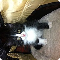 Adopt A Pet :: Mercedes - Bradenton, FL
