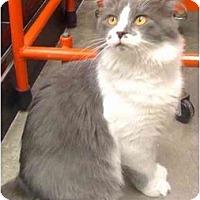 Adopt A Pet :: Fabio - Greenville, SC