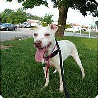 Adopt A Pet :: Baby - Dallas, PA