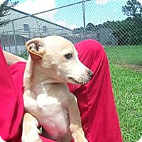 Adopt A Pet :: Chesterfield - Gadsden, AL