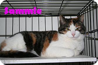Domestic Shorthair Cat for adoption in East Stroudsburg, Pennsylvania - Sammie II