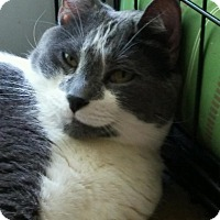 Adopt A Pet :: Buddha - Centerton, AR