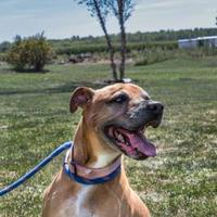 Adopt A Pet :: Lakoda - Fort Dodge, IA