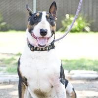 Adopt A Pet :: Hendrix - Fresno, CA