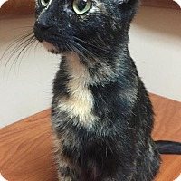 Adopt A Pet :: Butterscotch - Livonia, MI