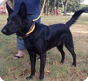 German Shepherd Dog Mix Dog for adoption in Fort Worth, Texas - TRISTAN