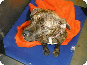 Terrier (Unknown Type, Small) Mix Dog for adoption in Hearne, Texas - Sasha