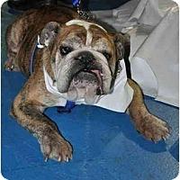 Adopt A Pet :: Wallace - Winder, GA