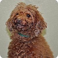 Adopt A Pet :: Rusty - Port Washington, NY