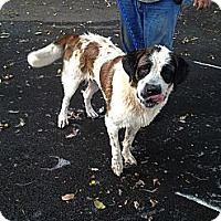 Adopt A Pet :: Whiskey - Dandridge, TN