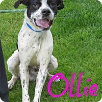 Adopt A Pet :: Ollie - Scottsdale, AZ