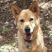 Australian Cattle Dog Mix Dog for adoption in Lago Vista, Texas - Sandy