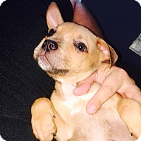 Adopt A Pet :: Tiny - Miami, FL