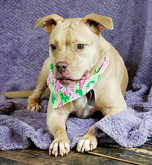 Pit Bull Terrier Mix Dog for adoption in Lawrenceville, Georgia - Baby