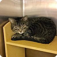Adopt A Pet :: Jake - Colmar, PA