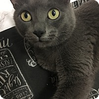Adopt A Pet :: Pasta - THORNHILL, ON
