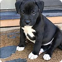 Adopt A Pet :: Jill $250 - Seneca, SC