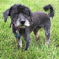 Adopt A Pet :: Middy - Landenberg, PA