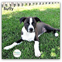 Adopt A Pet :: Buffy - Plainfield, IL