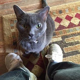 Domestic Shorthair Cat for adoption in Philadelphia, Pennsylvania - Liza