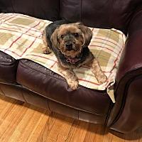 Adopt A Pet :: Gia - N. Babylon, NY