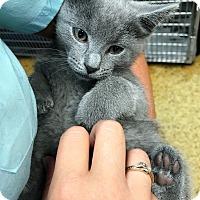 Adopt A Pet :: Seal - Toledo, OH