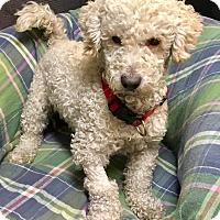 Adopt A Pet :: Oatmeal - Phoenix, AZ