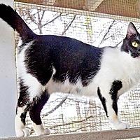 Adopt A Pet :: Carson17 - Youngsville, NC