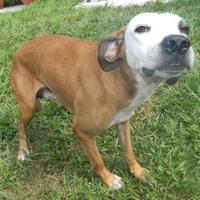 Adopt A Pet :: Tirk - Umatilla, FL