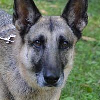 Adopt A Pet :: Jolie - Enfield, CT
