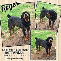 Adopt A Pet :: Ruger - Ponca City, OK