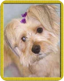 Terrier (Unknown Type, Small)/Terrier (Unknown Type, Small) Mix Dog for adoption in North Palm Beach, Florida - Norah