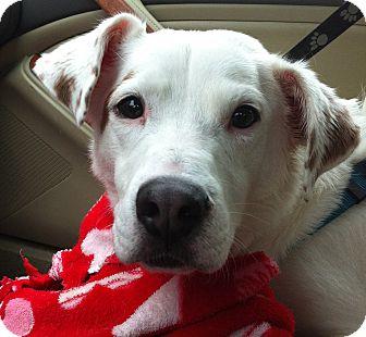 Australian Shepherd/Terrier (Unknown Type, Medium) Mix Dog for adoption in Minnetonka, Minnesota - Charlie