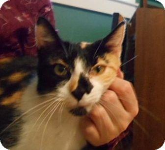 Calico Cat for adoption in Marion, North Carolina - Calliope