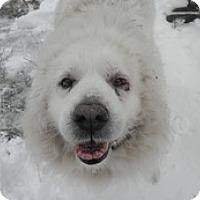 Adopt A Pet :: Big Joe - Madison, WI