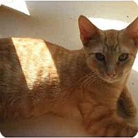 Adopt A Pet :: Percy - Warren, MI