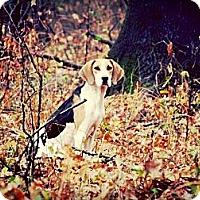Adopt A Pet :: Louise - Justin, TX