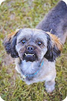Shih Tzu Dog for adoption in Conyers, Georgia - Benji