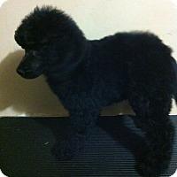 Adopt A Pet :: Baby Boy - Northumberland, ON