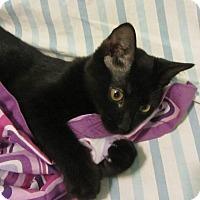 Adopt A Pet :: Norm - Norwich, NY