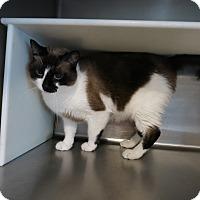 Adopt A Pet :: Cisco - Geneseo, IL