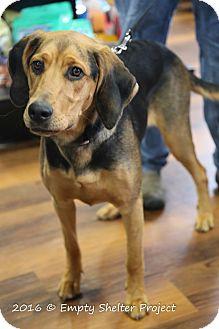 Hound (Unknown Type)/Shepherd (Unknown Type) Mix Dog for adoption in Manassas, Virginia - Lana *Adoption Pending*