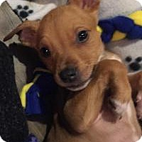 Adopt A Pet :: Dierks - Marlton, NJ