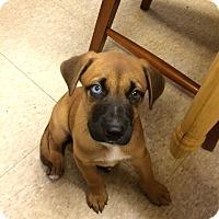 Adopt A Pet :: Merlin, Marco, Murphy - Fair Oaks Ranch, TX